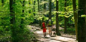 Wandern auf dem Kettwiger Panoramasteig: Ein Paar wandert in einem Wald in Essen
